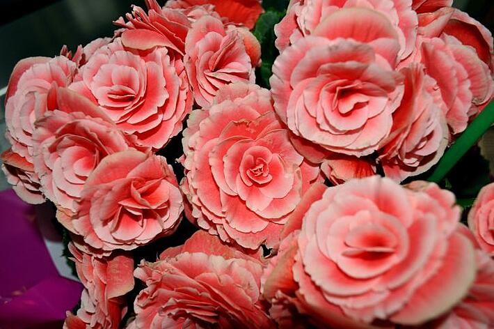 How to get high quality flowers at a lower cost